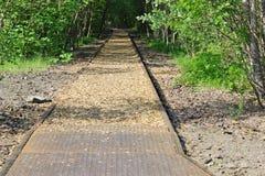 Stara linia kolejowa przez lasu Zdjęcia Royalty Free