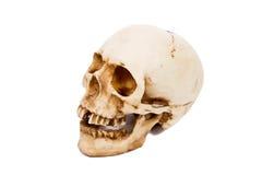 Stara ludzka czaszka odizolowywająca na białym tle Zdjęcia Stock