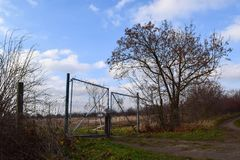 Stara nieociosana brama z drzewem zdjęcia royalty free