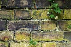 stara ogrodowa ściany Obrazy Royalty Free