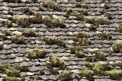 stara płytkich moss fotografia royalty free