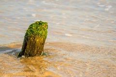 Stara pachwina w morzu bałtyckim obraz stock