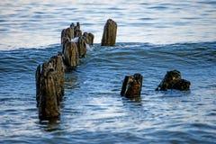 Stara pachwina w morzu bałtyckim obrazy stock