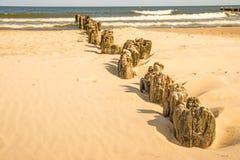 Stara pachwina w morzu bałtyckim w Polska zdjęcia royalty free