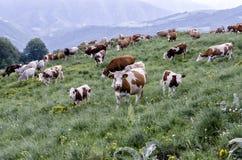 Stara Planina mountain Stock Image