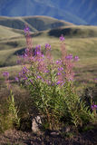 Stara planina mountain in Serbia Royalty Free Stock Images