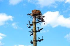 Stara poczta z ptaka gniazdeczkiem Zdjęcia Royalty Free