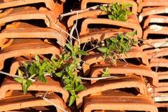 Stara pomarańczowa dachowa płytka z roślinnością Fotografia Royalty Free