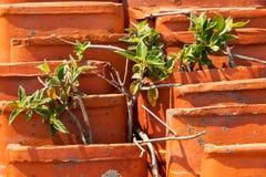 Stara pomarańczowa dachowa płytka z roślinnością Zdjęcia Stock