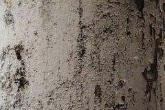 Stara popielata ściana textured tło Fotografia Stock