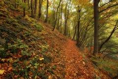 Stara reka Reserve in the autumn, Bulgaria Stock Image