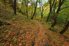 Stara reka Reserve in the autumn, Bulgaria Royalty Free Stock Photos