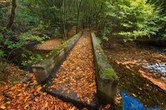 Stara reka Reserve in the autumn, Bulgaria Stock Photography