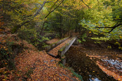 Stara reka Reserve in the autumn, Bulgaria Royalty Free Stock Images