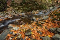 Stara reka Reserve in the autumn, Bulgaria Royalty Free Stock Photo