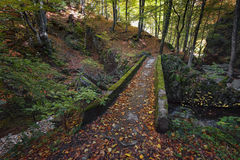 Stara reka Reserve in the autumn, Bulgaria Stock Photo