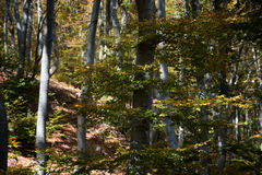 Stara reka Reserve in the autumn, Bulgaria Royalty Free Stock Photography