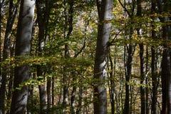 Stara reka Reserve in the autumn, Bulgaria Stock Photos