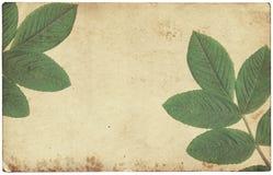 Stara rocznika papieru tekstura z suchymi liśćmi odizolowywającymi Zdjęcia Stock