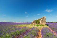 Stara ruina w Lawendowych polach Zdjęcia Royalty Free