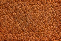 Stara skóra Zdjęcie Stock