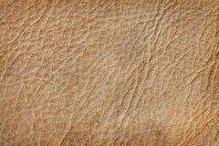 Stara skóra Zdjęcia Stock