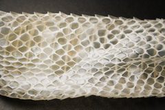 Stara skóra od węża Zdjęcia Royalty Free