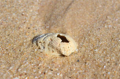 Stara skorupa na piasku Obrazy Royalty Free