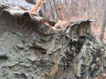 Stara spadać brzozy drzewna barkentyna, zakończenie las jesieni Obrazy Stock