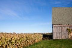 Stara stajnia, Kukurydzany pole i niebieskie niebo, Obrazy Stock