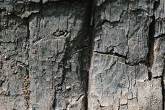 stara struktura drewniana Obrazy Stock