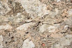 stara tekstury ściany Zdjęcie Royalty Free