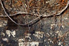 Stara Textured ściana Obrazy Royalty Free