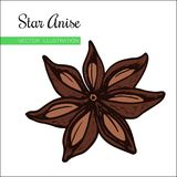 Staranise fill. Vintage hand drawn Star Anise Vector illustration isolated on white  background. Dried Star Aniseed or lllicium Verum, Used for Seasoning in Stock Photos
