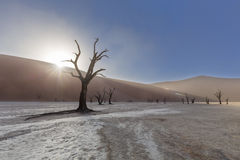 Starburst de Sun au-dessus de la dune chez Dooievlei Photo libre de droits