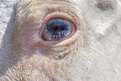 Starburst eye Stock Photography