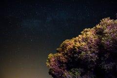 Stardust. Royalty Free Stock Photo