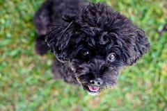 stare черной собаки Стоковое фото RF