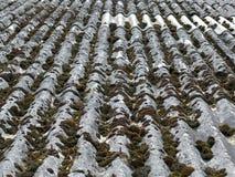 Stare azbestowe dachowe płytki zdjęcia stock