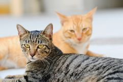 Stare from the cats. Two cats turning their heads and looking at the same direction Stock Photo