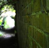 Stare cegły Zdjęcie Royalty Free