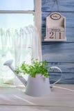 Stare d'innaffiatura con le erbe in cucina soleggiata Immagini Stock Libere da Diritti