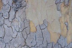 Stare drewniane skóry tekstury, zakończenie środowisko zdjęcia royalty free