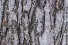 Stare drewniane skóry tekstury, zakończenie środowisko fotografia royalty free