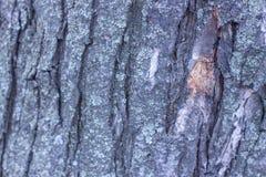 Stare drewniane skóry tekstury, zakończenie środowisko fotografia stock