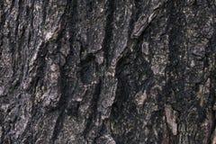 Stare drewniane tekstury Zdjęcie Stock