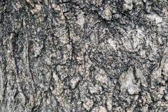 Stare drewniane tekstury Zdjęcie Royalty Free