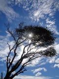 stare drzewo zdjęcia royalty free