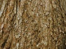 stare drzewo szczekać Fotografia Royalty Free