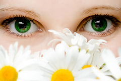 Stare of green women eyes. With chamomiles bouquet Stock Photography